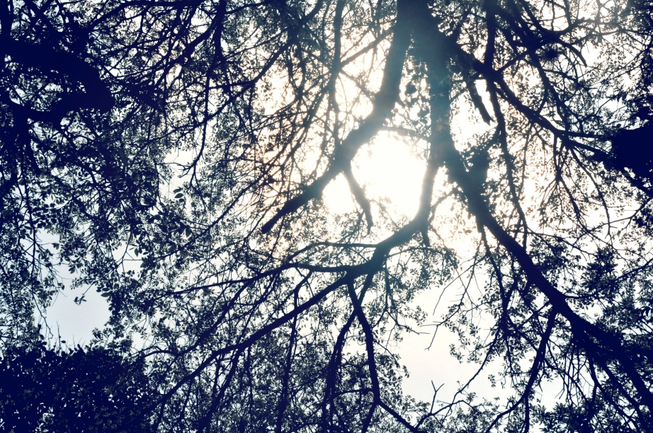 1 trees