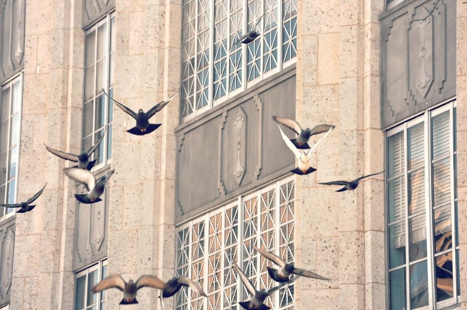 9 birds building