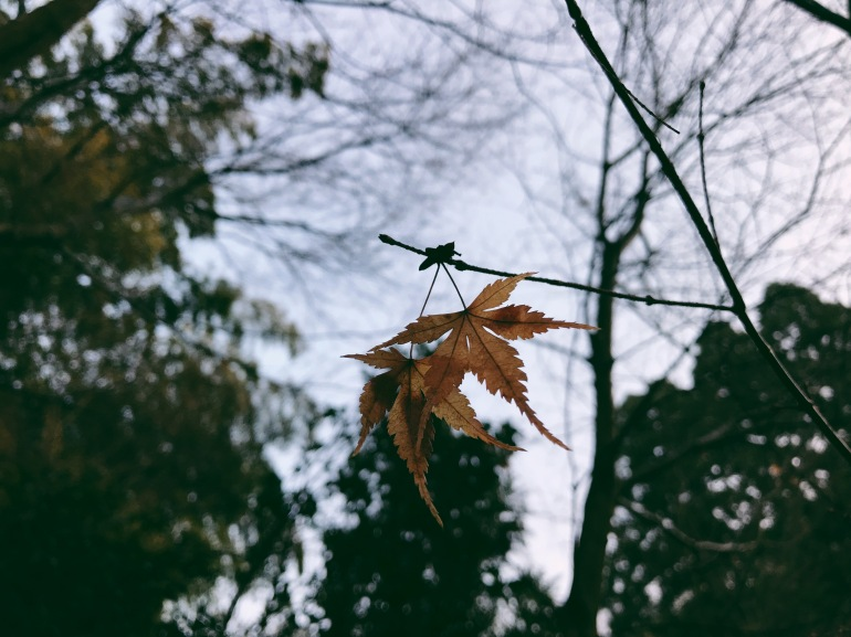 Processed with VSCO with 6 preset